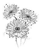 Beautiful gerbera. Flowers. Stock Photo
