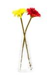 Beautiful gerbera in vase isolated Stock Photo