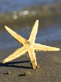 Beautiful and giant sea Star Ocean Beach photographed Stock Photo