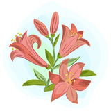 Beautiful gift card with orange lilies. Vector illustration of  beautiful gift card with orange lilies Royalty Free Stock Images