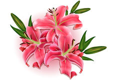 Beautiful gift card with pink lilies Stock Photo