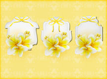 Beautiful gift cards with yellow plumerias Royalty Free Stock Photography