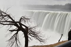 Beautiful gigantic frozen Horseshoe Niagara Waterfalls with a big tree on a frozen spring day in Niagara Falls in Ontario, Canada. Beautiful gigantic frozen Royalty Free Stock Photography