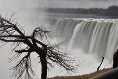 Beautiful gigantic frozen Horseshoe Niagara Waterfalls with a big tree on a frozen spring day in Niagara Falls in Ontario, Canada. Beautiful gigantic frozen Stock Photo