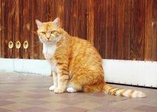 Beautiful ginger cat Stock Photos