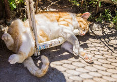 Beautiful ginger cat on the street sleeping sweetly Stock Photography