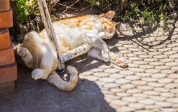 Beautiful ginger cat on the street sleeping sweetly Royalty Free Stock Photo
