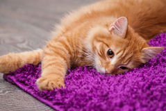 Beautiful ginger kitten. Beautiful little fluffy kitten lying on a carpet Royalty Free Stock Photo