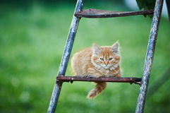 Beautiful ginger kitten sitting on ladder. Cat is looking forward. Photo in the street. Green background Royalty Free Stock Photos