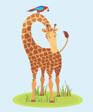 Beautiful Giraffe on grass. Looking at us, vector illustration Stock Photos