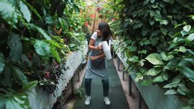 A beautiful girl in an apron dancing in a greenhouse. Florist happy, dancing and laughing. A beautiful girl in an apron dancing in a greenhouse. Florist happy stock video footage