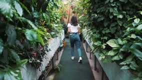 A beautiful girl in an apron dancing in a greenhouse. Florist happy, dancing and laughing. A beautiful girl in an apron dancing in a greenhouse. Florist happy stock footage