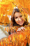 beautiful girl in autumn leaves Stock Images