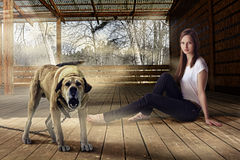 Beautiful girl and barking watchdog outdoors at wooden veranda. Young beautiful woman is sitting in wooden veranda on the floor, she is relaxed and feeling safe Stock Photography