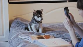 Beautiful girl on the bed photographed phone puppy Siberian Husky. Dolly,slider stock footage