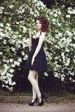 A beautiful girl in a black dress poses near a bush with white flowers. Stock Images