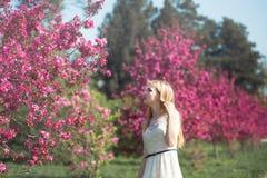Beautiful girl in blooming spring garden. Beautiful girl looking to sakura trees in blooming spring garden Stock Photos