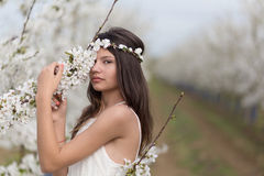 Beautiful girl and a blossomed cherry tree Stock Photos
