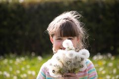 Beautiful girl with a bouquet of white dandelions on a spring meadow stock images