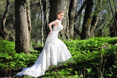 Beautiful girl bride in green wood by summer Stock Images