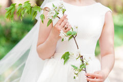 Beautiful girl bride in a white lace dress, holding a branch with cherry blossom Royalty Free Stock Photos