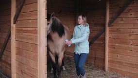 A beautiful girl brushing a horse in the stall stock video