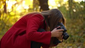 Beautiful girl with a camera walks through the autumn forest and takes pictures. Weekend outside the city. Weekend outside the city stock footage