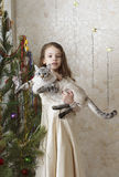 Beautiful girl with cat near Christmas tree. Stock Images