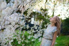 Beautiful girl in cherry blossom garden Royalty Free Stock Images