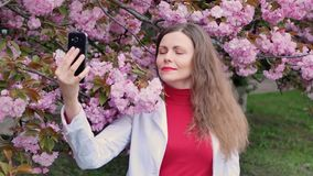 Beautiful girl among cherry blossom sakura tree spring pink flowers making selfie.  stock footage
