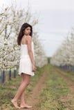 Beautiful girl in a cherry garden Stock Photos