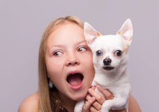 Beautiful girl with chihuahua Royalty Free Stock Photo
