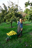 Beautiful girl collecting fresh fruit Royalty Free Stock Photography