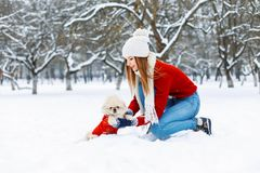 Beautiful girl with a cute dog walking in a winter park. Stock Photography