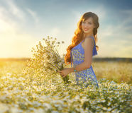 Beautiful girl in daisy field. Summer sunset Stock Images