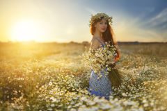 Beautiful girl in daisy field. Summer sunset Royalty Free Stock Photography