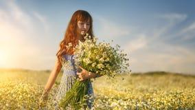 Beautiful girl in daisy field. Summer sunset Royalty Free Stock Photos