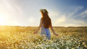 Beautiful girl in daisy field. Summer sunset Royalty Free Stock Images