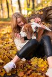 Beautiful girl with dog in the park. Young beautiful girl with a beagle in the park. Autumn sunny day Royalty Free Stock Photography