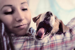 Beautiful girl with dreadlocks and dog puppy Jack Russell terrie Royalty Free Stock Images