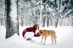 Beautiful girl dressed in a maroon sweater and white pants sat down next to red dog against a backdrop of snow-covered tree trunks royalty free stock photo