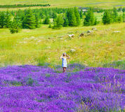 Beautiful girl enjoying lavender field Royalty Free Stock Images