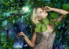 Beautiful girl in the fairy forest. Romantic Beauty in the misty forest Royalty Free Stock Photo