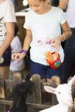 Beautiful Girl feeds white goat Royalty Free Stock Image