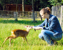 Beautiful girl feeds young deer Royalty Free Stock Images