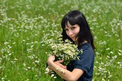 The beautiful girl in the field collect a bouquet of camomiles royalty free stock photography