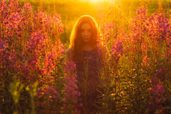 Beautiful girl on field, sun backlight,  sunrise Royalty Free Stock Image