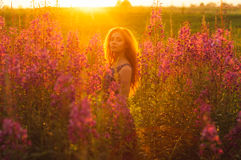 Beautiful girl on field, sun backlight, sunrise. Orange colors, looking to the camera royalty free stock photos