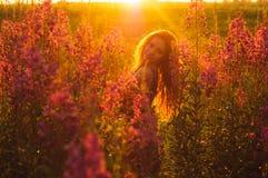 Beautiful girl on field, sun backlight,  sunrise Stock Photos