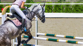 Beautiful girl on gray horse in jumping show, equestrian sports. Royalty Free Stock Images